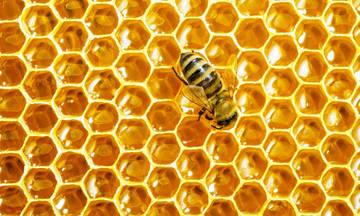 Η αλήθεια για το μέλι