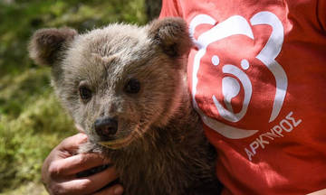 Ένας αρκούδος που θέλει να γίνει... Μπουφόν! (vid)