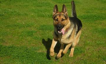 Κραυγή αγωνίας για το Καυταντζόγλειο - Έκαναν εκεί αγώνες... σκύλων