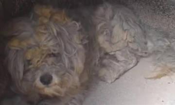 Φούρνος-κιβωτός του Νώε για ένα σκυλάκι στο καμμένο Μάτι (vid)