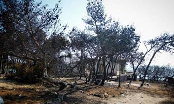 Απόλυτη καταστροφή στο Μάτι: Κάηκε το 70% της περιοχής (Χάρτης)