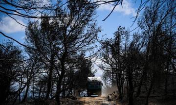 Έρχονται διώξεις για την πυρκαγιά στο Μάτι – Ποιοί είναι στο «στόχαστρο» των εισαγγελέων