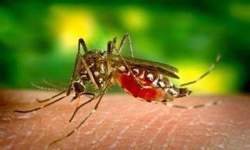Πέντε νεκροί από τον ιό του Δυτικού Νείλου