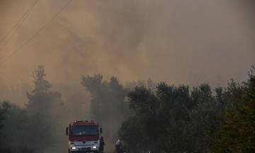 Πυρκαγιά στην Αμαλιάδα: Εκκενώθηκε χωριό