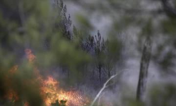 Πυρκαγιά στο Αργάσι Ζακύνθου
