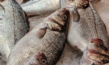 Φορούσαν φακούς επαφής στα ψάρια για να φαίνονται φρέσκα (pic)