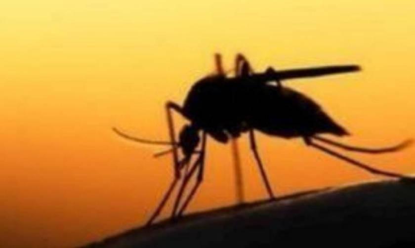 Στους 21 νεκρούς ανέβηκε ο αριθμός από τον ιό του Δυτικού Νείλου