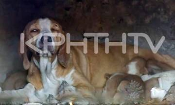 Απίστευτη κτηνωδία: Έκλεισαν σκυλίτσα και εννέα κουτάβια μέσα σε φούρνο και έβαλαν φωτιά (vid)