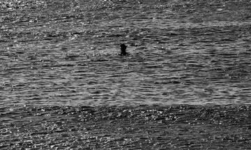 Κολυμβητές II: Έκθεση της Λίζης Καλλιγά στην Αίθουσα Τέχνης Αθηνών