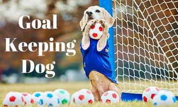 Σκύλος διορθώνει τη γκάφα του τερματοφύλακα σώζοντας την εστία του (vid)