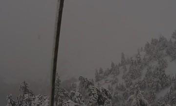 Εικόνα από την χιονισμένη Πάρνηθα - Τι δείχνει τώρα η live camera