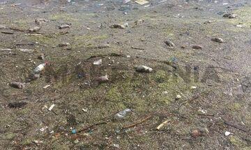 Ψόφια ποντίκια γέμισε η παραλία της Θεσσαλονίκης (vid)