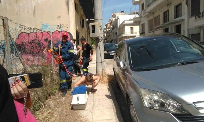 Φρίκη: Οδηγός στην Πάτρα πάρκαρε το αμάξι του πάνω σε... γατάκι (pics)