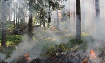 Μεγάλη φωτιά στην Εύβοια τώρα: Καίγονται Μακρυχώρι και Μανίκια