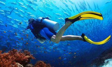 Δύτες ανακάλυψαν τσούχτρα 1,5 μέτρου στις ακτές του Ηνωμένου Βασιλείου! (pic&vid)