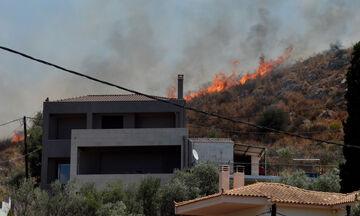Υπό έλεγχο η πυρκαγιά στο Ναύπλιο - «Οι πυροσβέστες έσωσαν τα σπίτια» λέει ο δήμαρχος