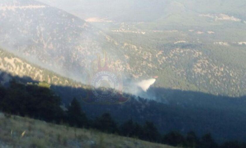Ανεξέλεγκτη η φωτιά στον Κιθαιρώνα - Ενισχύσεις από Αττική, Κ. Μακεδονία, Δ. Ελλάδα, Θεσσαλία