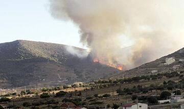 Πυρκαγιά στην Κερατέα (pic)