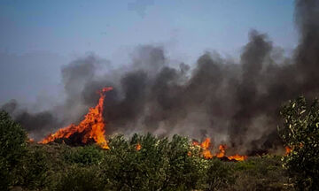 Αναζωπυρώθηκε η πυρκαγιά στην Ελαφόνησο - Νέες εστίες σε Ηλεία και Ζάκυνθο! (vid)