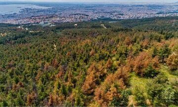 Απαγόρευση κυκλοφορίας μέχρι την Τρίτη στο δάσος του Σέιχ Σου (vid)