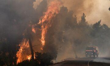 Φωτιά στην Εύβοια: To νησί σε κατάσταση έκτακτης ανάγκης-Βοήθεια από το εξωτερικό (upd)