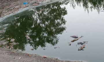 Δήμος Ιλίου: Στον Εισαγγελέα Περιβάλλοντος για τις άσχημες συνθήκες στο Πάρκο Τρίτση