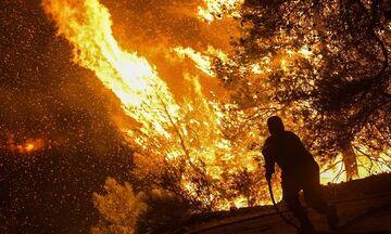 Πυρκαγιά στην Εύβοια: Στα 20 μέτρα οι φλόγες - Μάχη για να μη φτάσει η φωτιά στα Ψαχνά (pics)