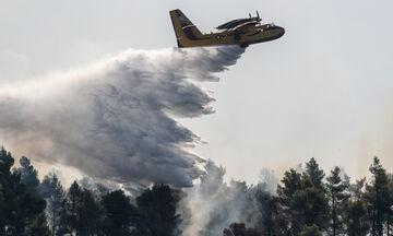 Πυρκαγιά στην Εύβοια: Συνεχείς αναζωπυρώσεις και μάχη με τις φλόγες (pics, vids)