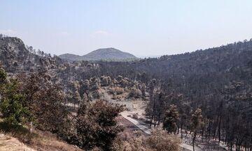 Η μεγάλη οικολογική καταστροφή στην Εύβοια (pics)