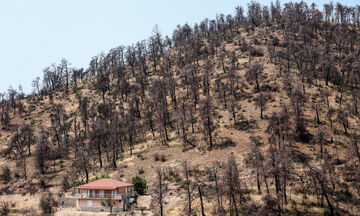 Fake News: Δεν κάηκε το δάσος Natura στην Εύβοια