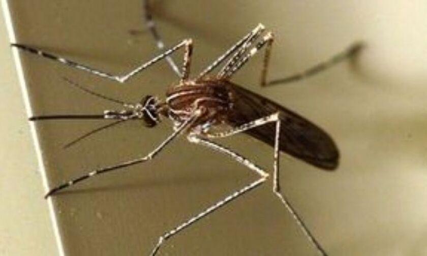 Στα μέτρα ατομικής προφύλαξης από τα κουνούπια εφιστά την προσοχή ο ΙΣΑ