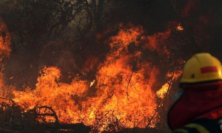 """Μαρίνα Σίλβα: Η καταστροφή στον Αμαζόνιο είναι """"ένα έγκλημα κατά της ανθρωπότητας"""""""