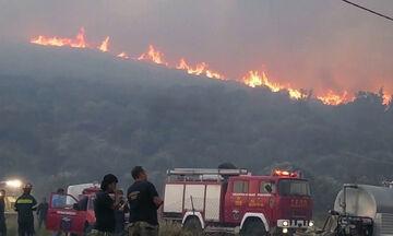 Ανεξέλεγκτη πυρκαγιά στη Σάμο: Τουρίστες μεταφέρονται σε ασφαλή σημεία (vid)
