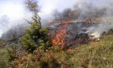 Μεγάλη πυρκαγιά στον Μαραθώνα Αττικής (pic)