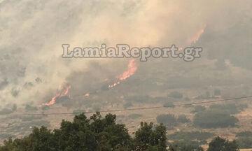 Πυρκαγιά στους Δελφούς: Κλειστός ο δρόμος της Ιτέας