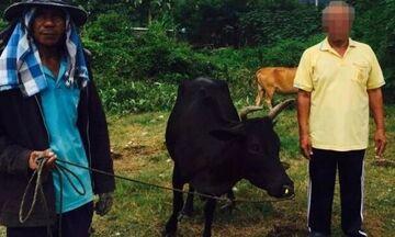 Ταϊλάνδη: Το σεξ με την αγελάδα του κόστισε 8 ευρώ!