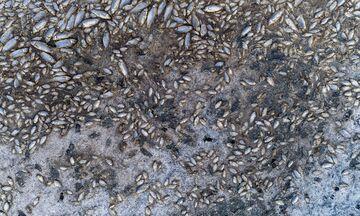 Η λίμνη Κορώνεια εκπέμπει SOS - Χιλιάδες ψάρια ξεβράστηκαν στη στεριά (pics)