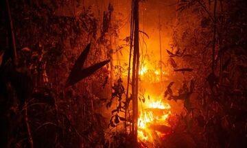 Πυρκαγιές στον Αμαζόνιο: 63 συλλήψεις και πρόστιμα 8,7 εκατ. δολ. ανακοίνωσε η Βραζιλία