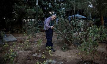 Φύτεψαν δένδρα στην πλατεία Εξαρχείων (vid, pic)