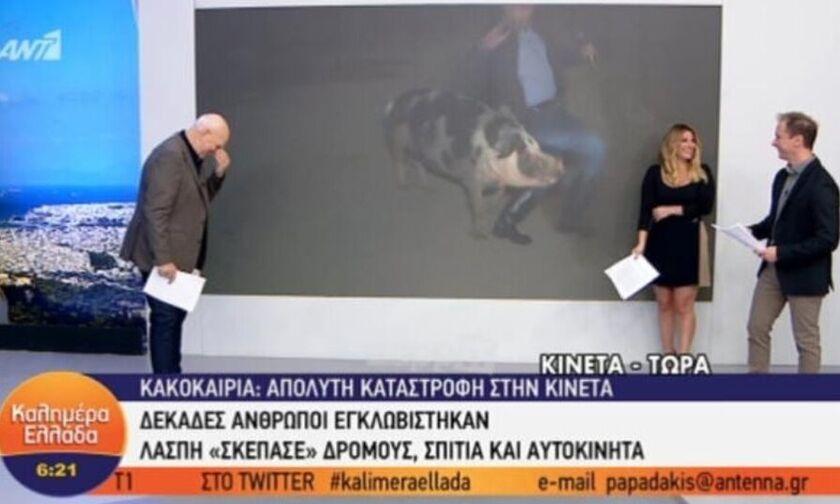 Γουρούνι πήρε ρεπόρτερ του «καλημέρα Ελλάδα» στο κυνήγι (video)