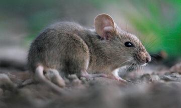 Ποντικοί έκοψαν κομμάτια από βρέφος στο Διδυμότειχο (vid)