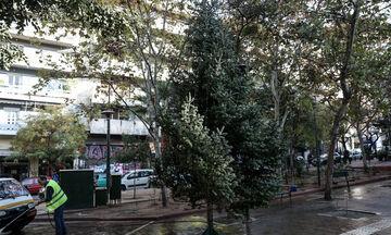 Εξάρχεια: Στήθηκε ξανά το χριστουγεννιάτικο δέντρο! (pics)