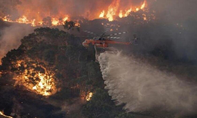 Αυστραλία: Οι πυρκαγιές κατέστρεψαν το 20% των δασών όλης της χώρας!