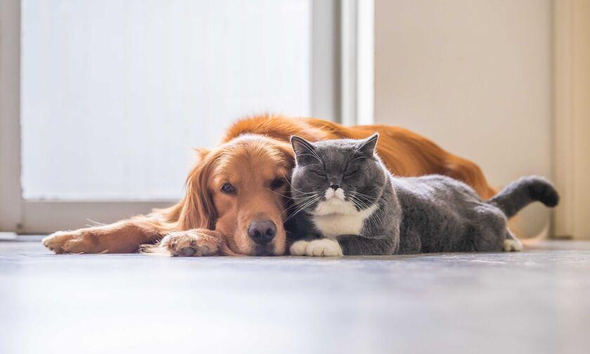 Ευάλωτες στον κορονοϊό οι γάτες-χαμηλότερη η πιθανότητα μετάδοσης του ιού μεταξύ σκύλων