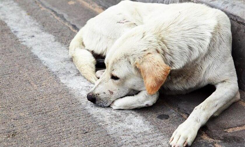 Αλεξανδρούπολη: Έκπτωση 50% στο νερό για όσους υιοθετήσουν αδέσποτο ζώο!