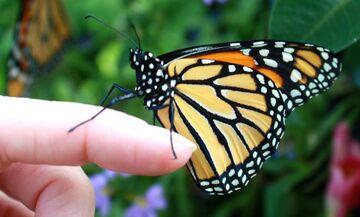 «Το βάρος της πεταλούδας»