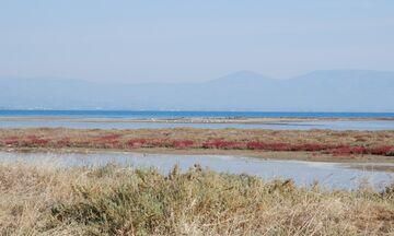 Φως στην Ελλάδα: Το μέρος στην Αττική που μπορείς να δεις μέχρι και φλαμίνγκο