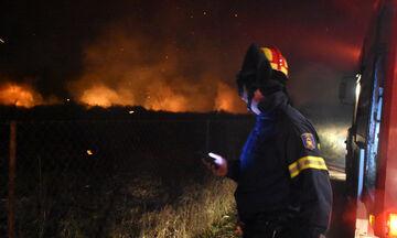 Ανεξέλεγκτη η φωτιά στο Μαρτίνο: Πέρασε την εθνική οδό Αθηνών-Λαμίας (vid)