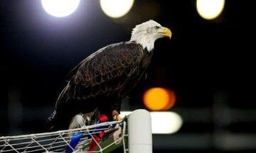 «Έφυγε» ο αετός της Κρίσταλ Πάλας (vid)
