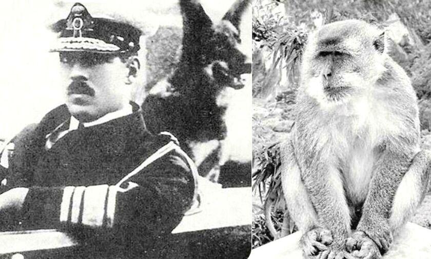 Το μυστήριο στο Τατόι - Ο διάδοχος και η μαϊμού